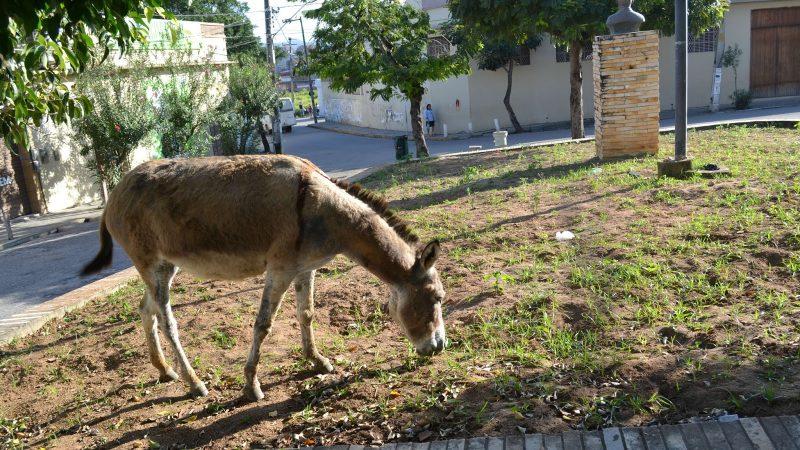 Decreto regulamenta recolhimento e destinação de animais soltos no município